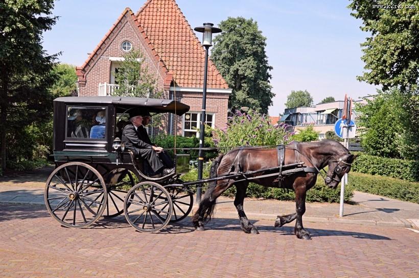 荷兰传统马车图片 第8张