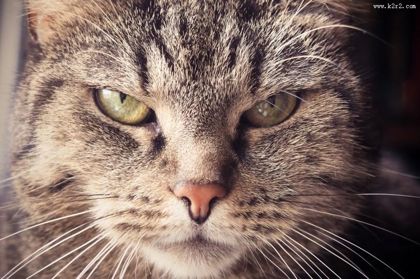 性格温顺的猫的头图片大全 第1张