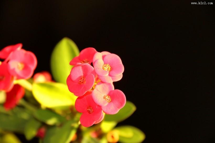 高光下的小红花图片 第3张